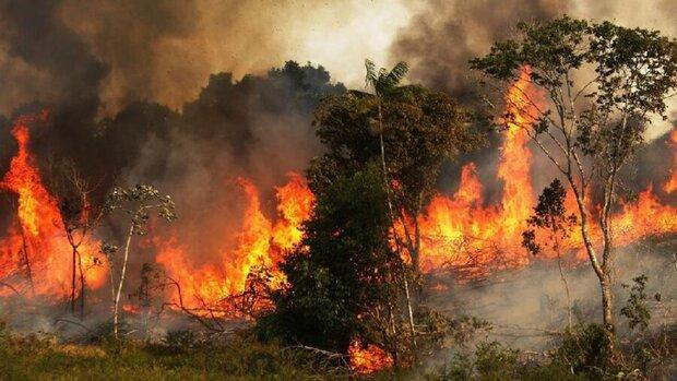 تخصیص ۱۵ میلیارد تومان برای تجهیزات اطفای حریق جنگل ها